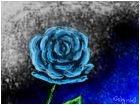 blue rose =3