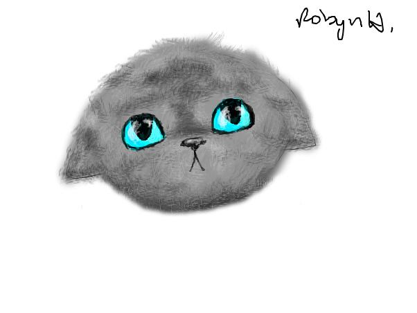 Just Kitten Head =3