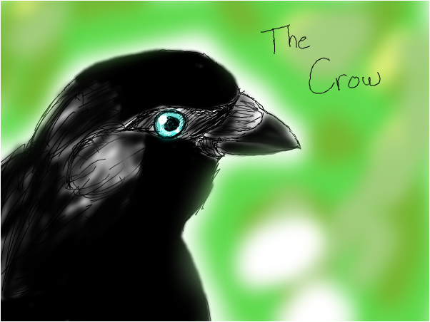 Crows are beautiful!