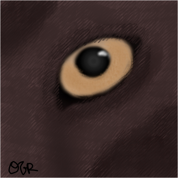 somewhat relistic cat eye