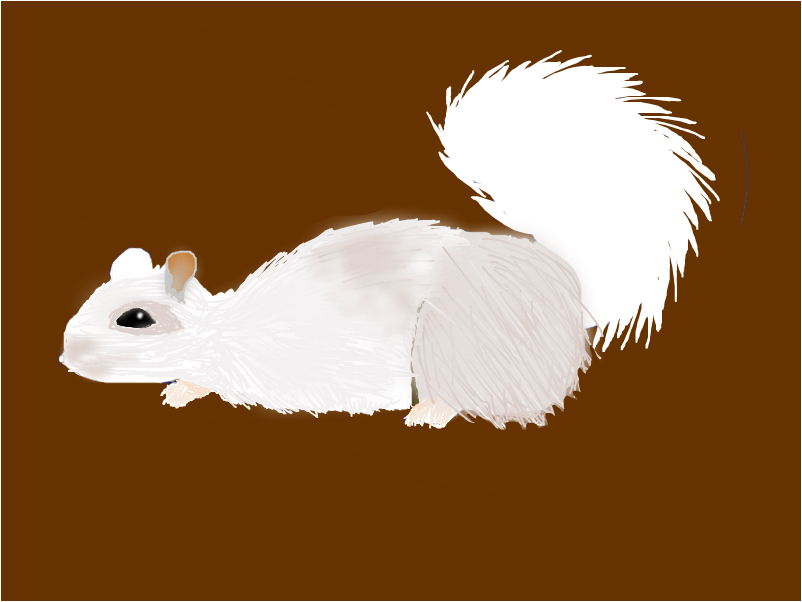 Unfinished White Squirrel