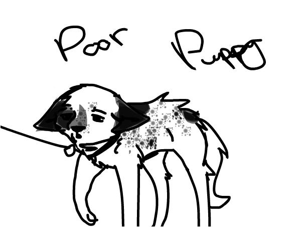 Poor Puppy. ~Star