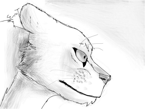 Lioness~