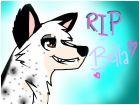 RIP Bella ~Star