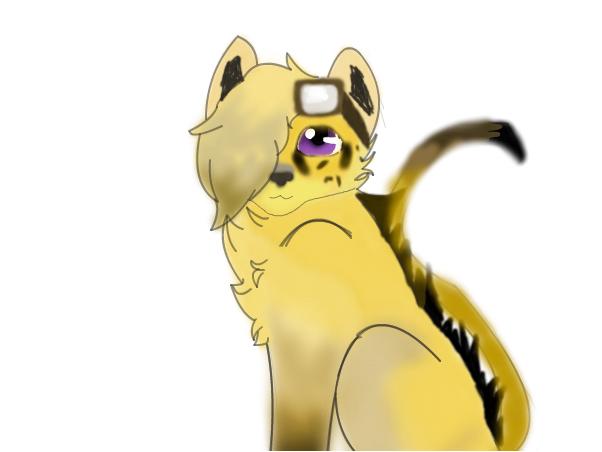 @AMP ~Kitten