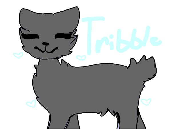 my cat irl