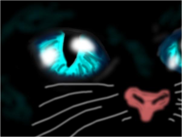 Blue Eyed Kitty!