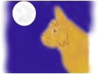 Cat Under the Full Moon