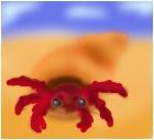 Big Boy (My Hermit Crab