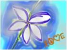 My lovely flower <3
