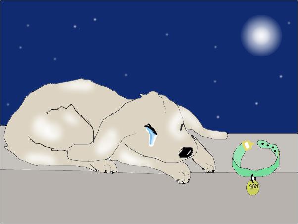 Sad, Lost Puppy