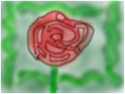 beutiful rose