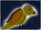 bird duh