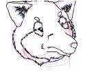 My New Mascot Sketch