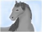 Beautiful,grey horse