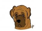 Mastiff Dog, Chocolat