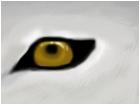 Wolf'e Eye-Kiba