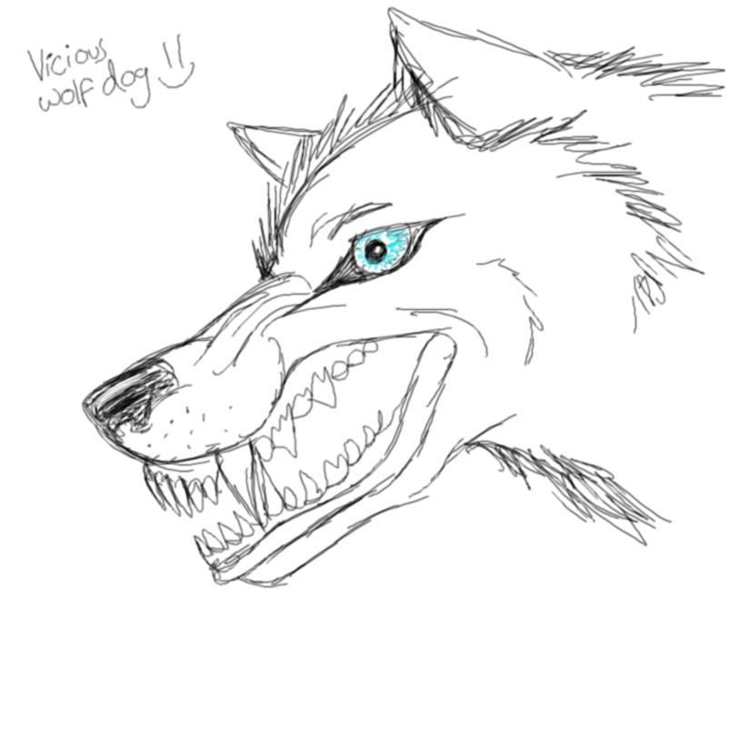 Vicious Wolf/dog
