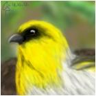 Rare Bird.