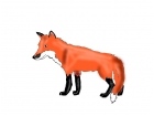 this is my fox jessy