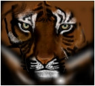 tigre not finished