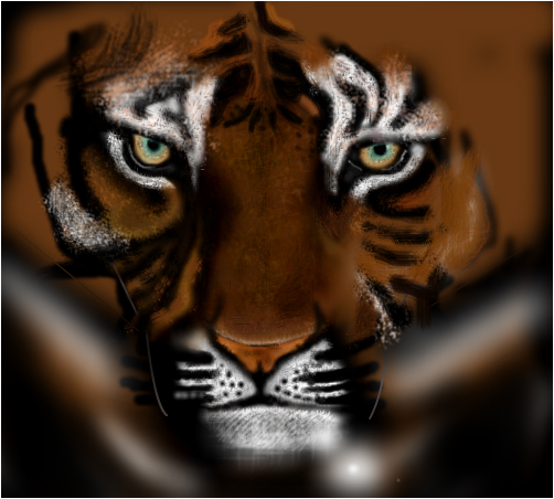 tiger not yet finished