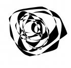 Black rosey