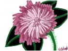 Pink Pom Flower