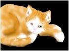 kitty cat:3