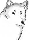 Wolf Sketch!!