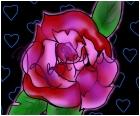 rose<33
