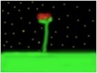glowin rose