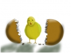 new born chick