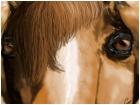 eyes of a horse