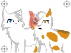 Brightheart x Cloudtail