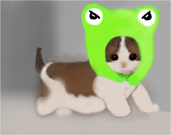 Cat with frog hat