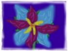 Dream Flower