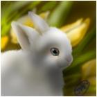 bunny:3