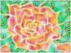 calm flower
