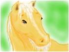Tis a horsie