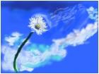 CloudFlower