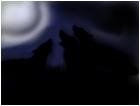 Three wolves
