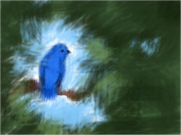Little Baby Bluebird