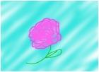 Water Carnation