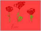 contempary roses