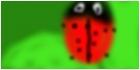 laddy bug