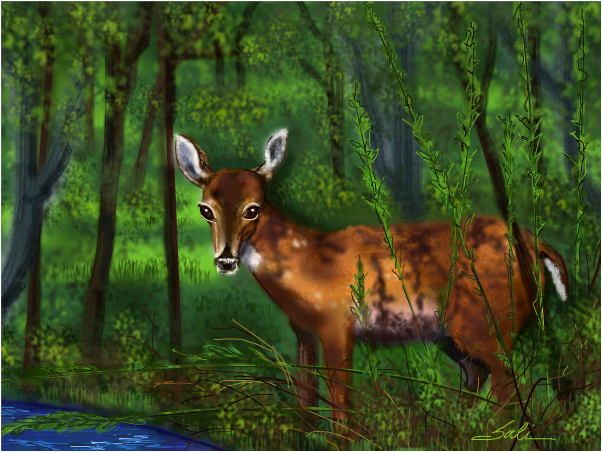 Yearling in the woods