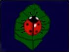 Ladybug on a leaf   3-7-11