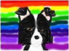 The Rainbow Border Collie