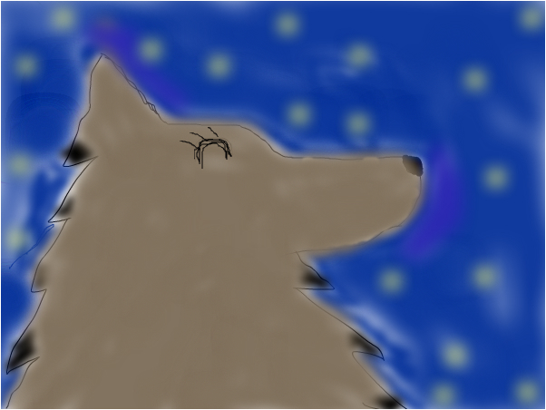the wolf with stars